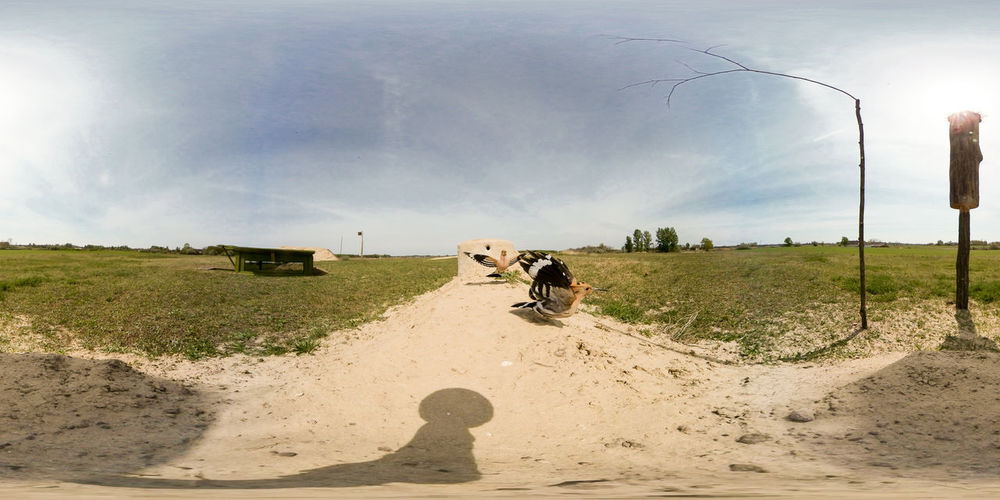 360 Degree Animal Themes Cattle Cow Day Dog Domestic Animals Field Grass Landscape Livestock Mammal Nature One Animal One Person Outdoors People Pets Real People Road Rural Scene Sky The Way Forward Tree Virtual Reality