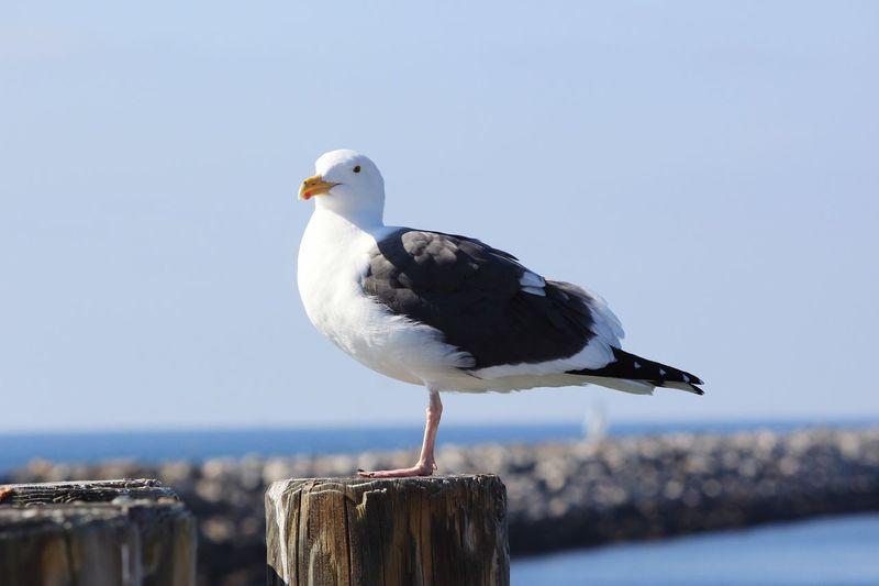 Bird One Animal