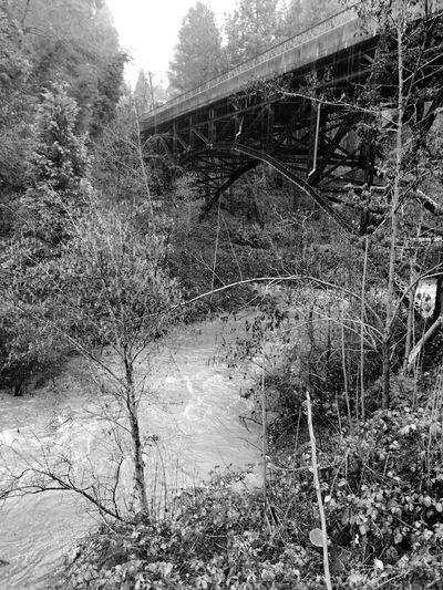 Winter Bridge Flooding Creek Creekside Rain Rainy Days Built Structure Tree Architecture Nature Blackandwhite