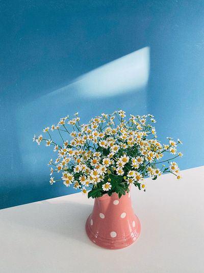 Close-up of flowering plant in vase on table against wall