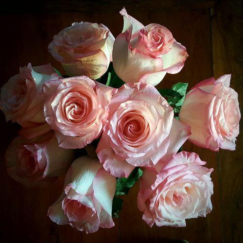 My favourite rose. Roseofpompadour