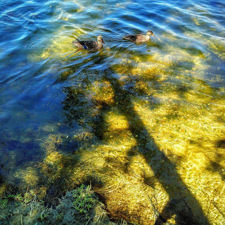 Nature Taking Photos ❤ My Photography Sacramento, California 43 Golden Moments Pyrite Fools Gold Golden Sand Water Photography Shallow Water American River Ducks In Water Eye4photography  Shadows And Silhouettes Showcase July