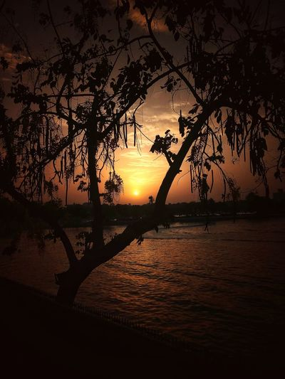 sunset Kankaria Lake Kankaria Lake Ahmedabad Nagina Wadi Tree Water Sea Sunset Beach Silhouette Reflection Branch Sky Horizon Over Water Tropical Tree Romantic Sky Atmospheric Mood The Great Outdoors - 2018 EyeEm Awards