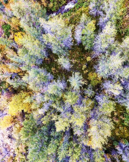 It's all about perspective Drone  Dronephotography Wildlife Flora And Fauna Aerial View Bird's Eye View Dronestagram Trees Wild Nature Adventure