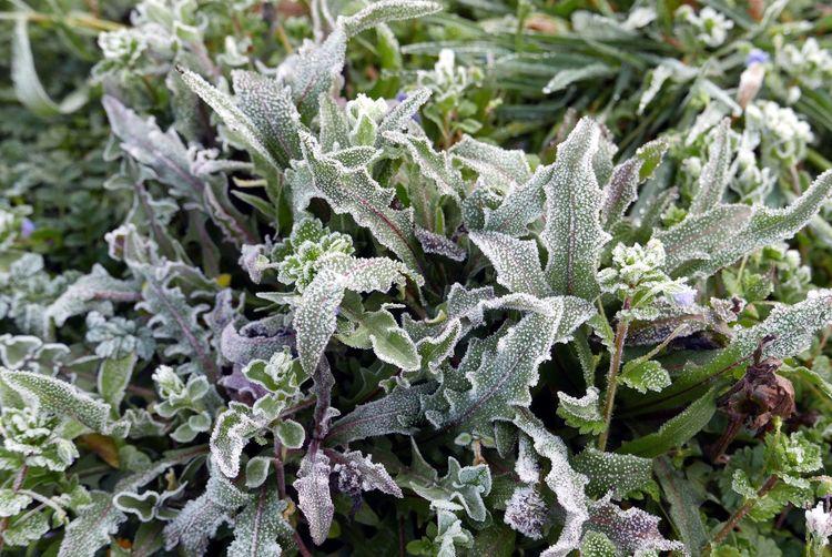 Full frame shot of frosty plants
