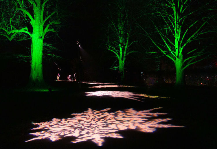 Illuminated Tree Outdoors Green Color Snowflake Spectacle Of Light Sudeley Castle