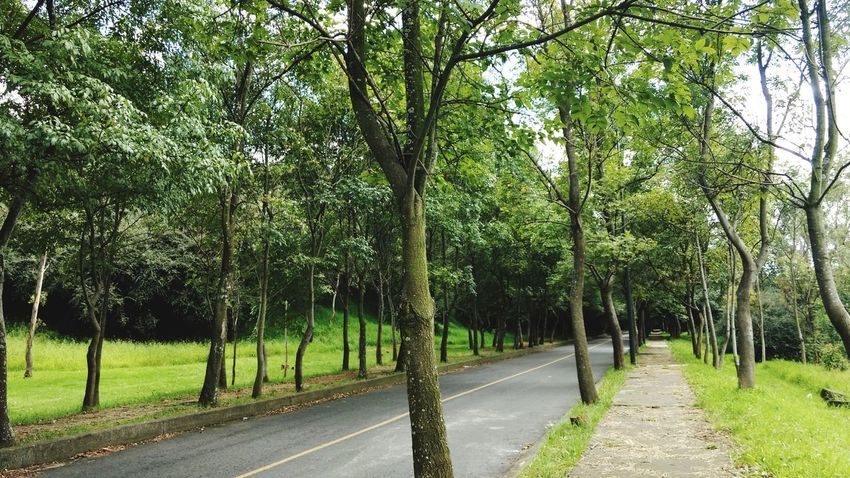 Tree The Way Forward Road Outdoors Green Color Nature Growth Day No People Beauty In Nature Sky Pathway Park Cdmx2017 Chapultepec CDMX Mexico City Nature Tree Beauty In Nature