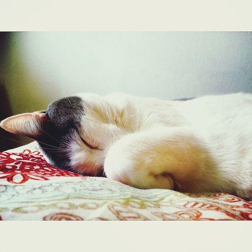 Lulu Cat♡ Cat Model Cat Lovers