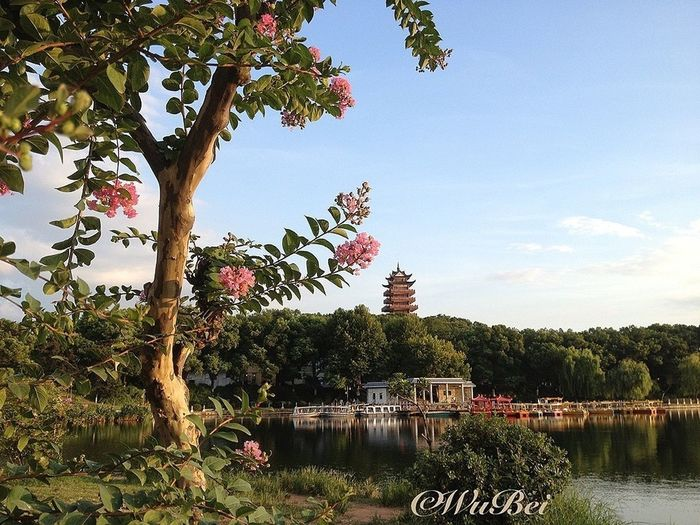 TreePorn Landscape_Collection EyeEm Best Shots - No Edit IPhoneography