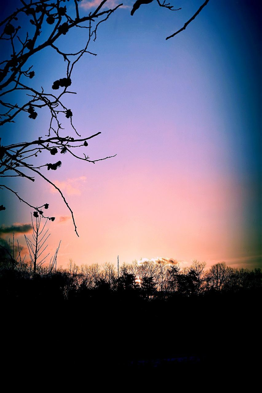 tree, sunset, silhouette, nature, beauty in nature, tranquil scene, tranquility, no people, scenics, landscape, outdoors, growth, sky, clear sky, day