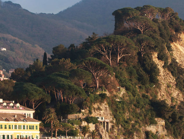 Architecture Beauty In Nature Camogli Growth Hill Landscape Lush Foliage Maritime Pines Mountain Nature No People Outdoors Pines Forest Rock Formation Stair Tourism Tranquil Scene Tree