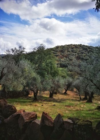 Andalucia pics Stone Wall Olive Trees Hill Cloud - Sky Sky No People Outdoors Day Nature Agriculture Beauty In Nature Travel Destinations Countryside Eye4photography  EyeEm From My Point Of View Tadaa Community Taking Photos Enjoying Life Capture The Moment Everyday Joy Travel Photography Landscape Tourism