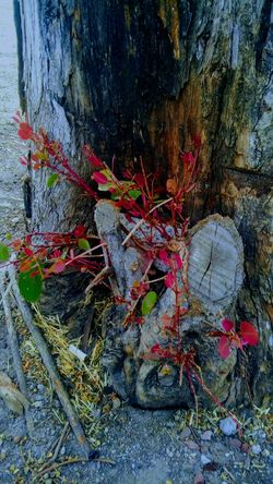 SPAIN Beauty In Nature Close-up Day Nature No People Outdoors Rock - Object Tree