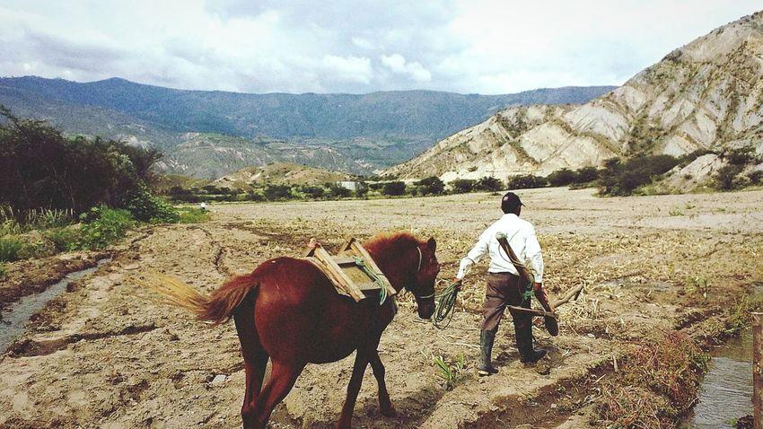 Ecuador♥ Horses Culture