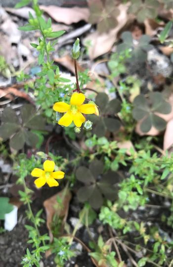 Plant Flower Yellow Freshness Flowering Plant Growth Beauty In Nature Fragility Close-up Flower Head No People Day Nature
