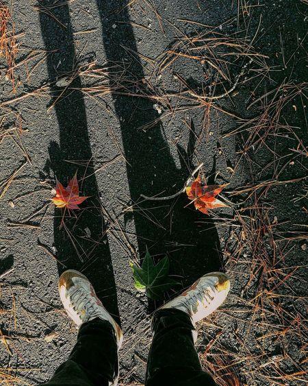 Có con đường nào bước qua... ta đến mang em món quà Highlife Lifestyles Autumn Dalat