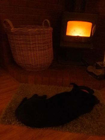 A dogs life. Home Is Where The Art Is Relaxing Dogslife Firelight