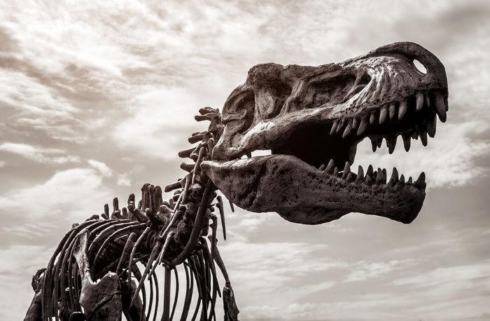 Tyrannosaurus rex skeleton against cloudy sky background. Toned image Bones Dino Dinosaur Dramatic Sky Fossil Moody Sky Skeleton Tyrannosaurus Rex Carnivorous Cloud - Sky Day Extinct Extinction No People Outdoors Powerful Predator Prehistoric Sculpture Skull Sky Statue T-rex Toned Image Tyrannosaurus