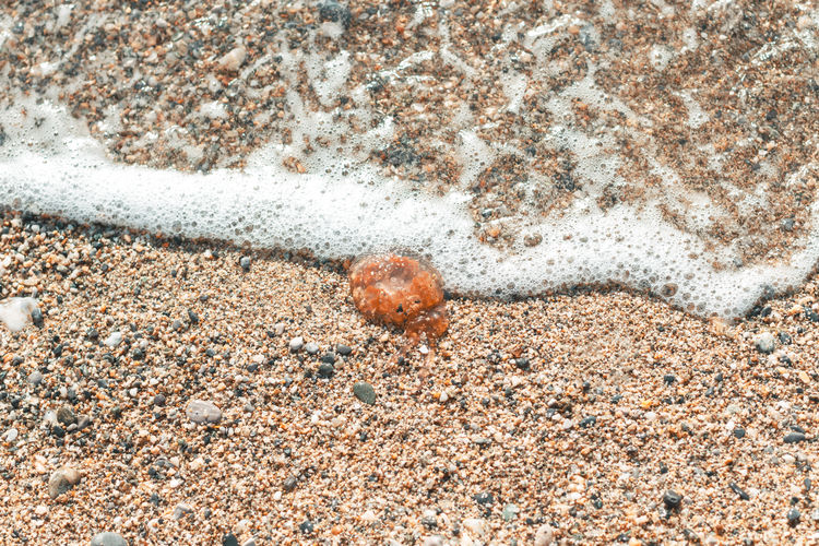 High angle view of crab on sand