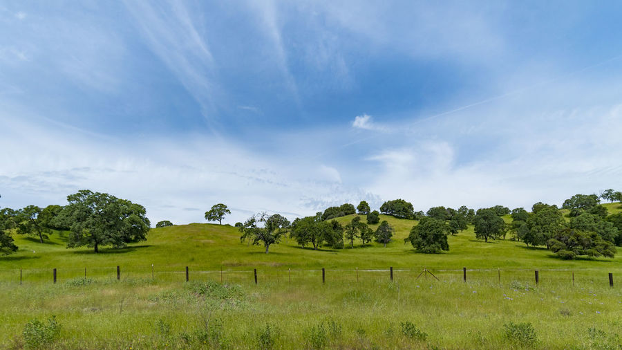 Green Pasture Agriculture Beauty In Nature Cloud - Sky Day Field Field Grass Green Color Growth Landscape Nature No People Orchard Outdoors Pasture Rural Scene Scenics Sky Tranquil Scene Tranquility Tree