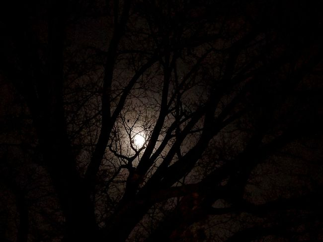 Tree Branch Night No People Low Angle View Silhouette Nature Beauty In Nature Indoors  Close-up Sky Moon Moonlight