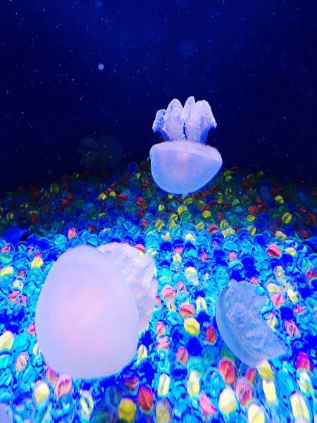 Jerryfish Aquarium