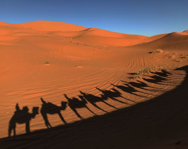 Camelride Land