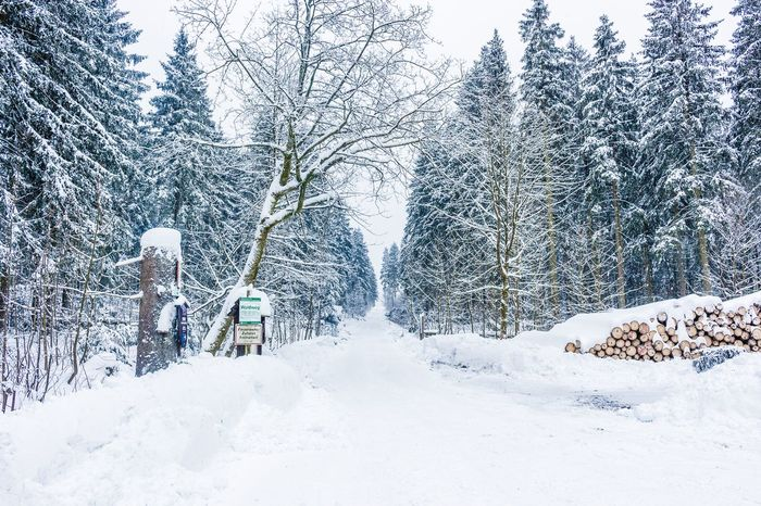 Into the woods. Winter Snow Cold Temperature Tree Nature Transportation No People Snowing Outdoors Day Beauty In Nature Sky Shades Of Winter