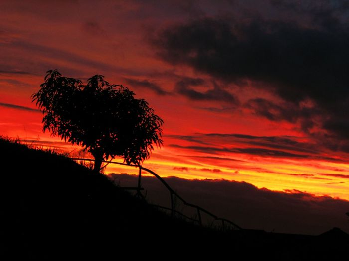 Silhouette tree against dramatic sky during sunset