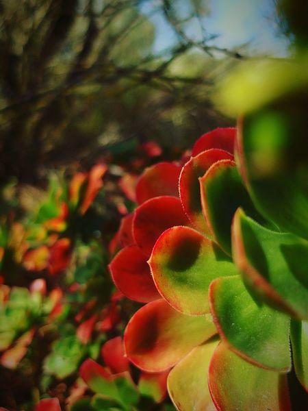 Portogallo EyeEm Nature Lover