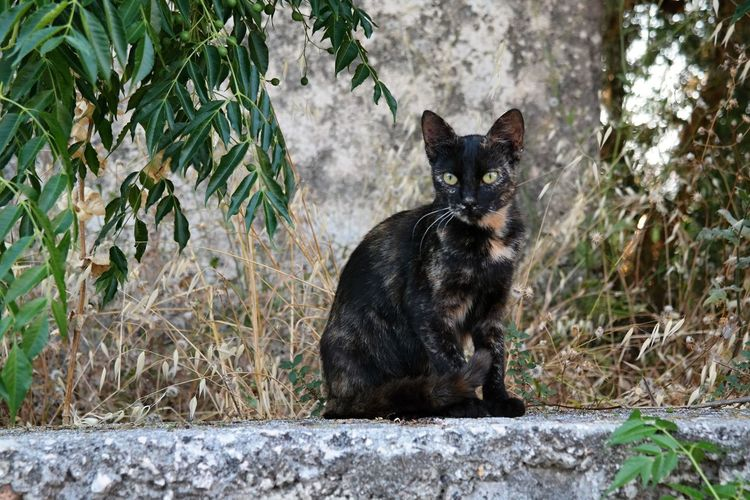 Animal Themes Day Domestic Animals Domestic Cat Feline Free Cats Of Greece Mammal Nature No People One Animal Outdoors Pets Plant Sitting Tree Pet Portraits