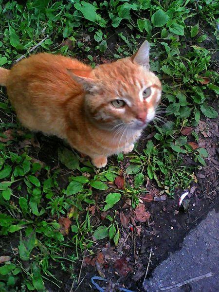 рыжий кот рыжий рыжийпозер Photo Effects Photography Popular Photos Popular Eye4photography  EyeEm Gallery EyeEm Nature Lover