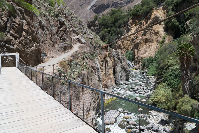 Colca Canyon Hiking Tour Colca Canyon Canyon Peru Southamerica Mountains Landscape Nature Hiking Trekking Railing Tree Plant Day Mountain Tranquility Rock No People Footpath Solid Connection Bridge Beauty In Nature Scenics - Nature Built Structure The Way Forward Rock - Object Direction Tranquil Scene Outdoors Footbridge