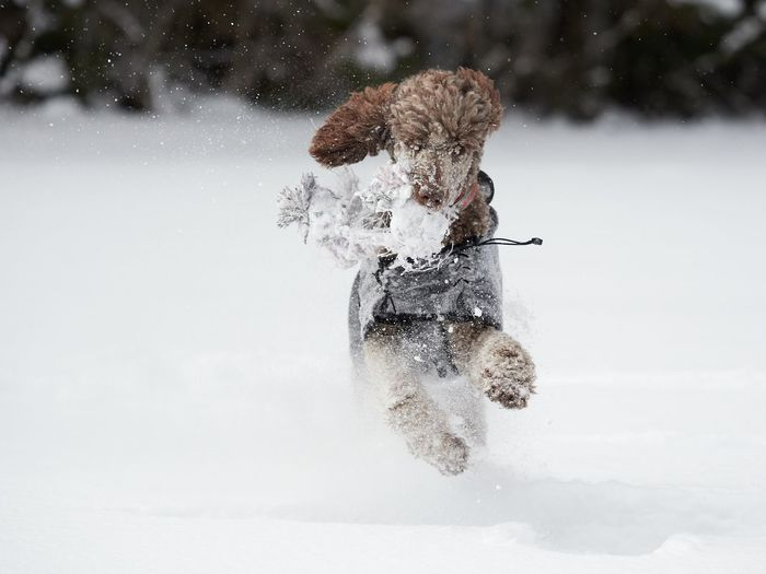 Person with umbrella on snow