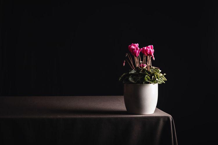 Close-up of pink flower vase on table against black background