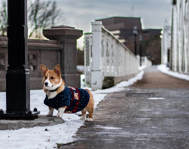 Dog by pole in snow