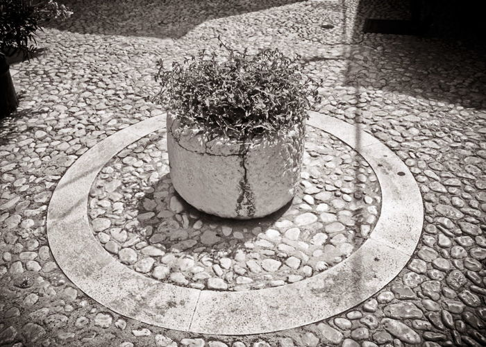 A circular one. Sunlight No People Day Outdoors Shadow Nature Close-up Blackandwhite The Week On EyeEm Nicospecial Treveling Nicospecial.de Architectureporn Architectural Design Pet Portraits