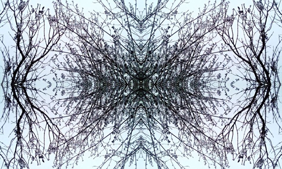 Taking Photos Relaxing Hanging Out Winter_collection Trees And Sky Abstract Photography Abstract Shapes , Lines , Forms & Composition