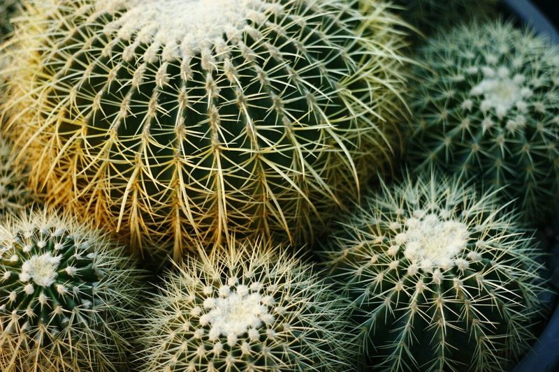 Taking Photos Check This Out Enjoying Life Plants Lifestyles Light And Shadow Cactus Garden Marketplace Market Blossoms  Plants And Flowers Cactus Cactusmagazine Fine Art Photography