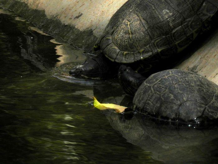 Turtle Turtle Swimming Zoo Zoo Animals  Zoo Day ZooLife Zoology Zoophotography