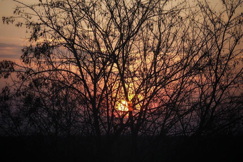 Sunrise Sunlight Tree Branch Bare Tree Silhouette Tree Area Dusk Sky Romantic Sky Atmospheric Mood Moody Sky Atmosphere Dramatic Landscape Dramatic Sky