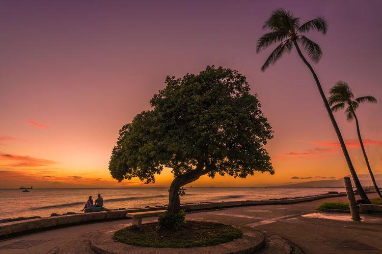 Silhouette tree at beach against orange sky