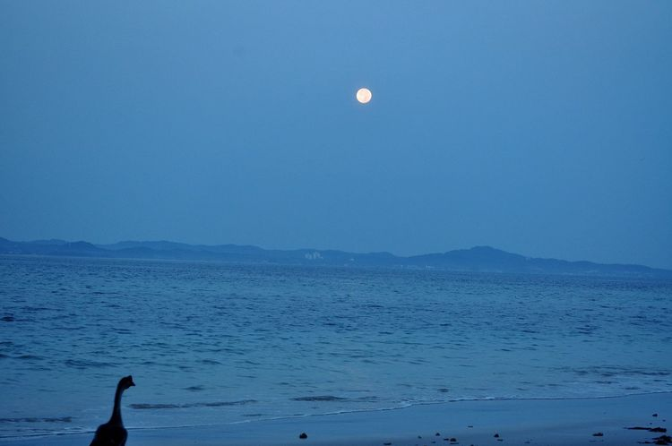 Last Month Pic Dawn Moon Sea Full Moon Beach Scenics Blue Nature Beauty In Nature Crescent Sky Horizon Over Water Water Outdoors Animal Themes Day EyeEm Nature Lover EyeEm Gallery