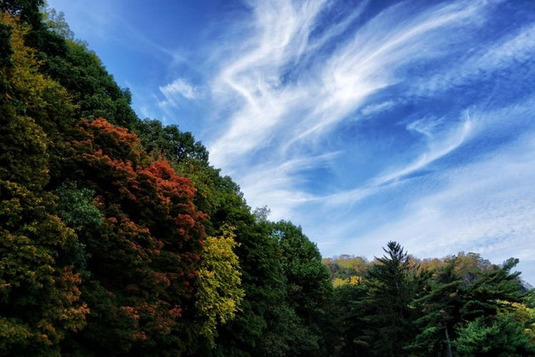Trees in Early Fall Tree Sky Low Angle View Nature Cloud - Sky Scenics Outdoors Beauty In Nature Early Fall Autumn Clouds And Sky Colorful Scenic View