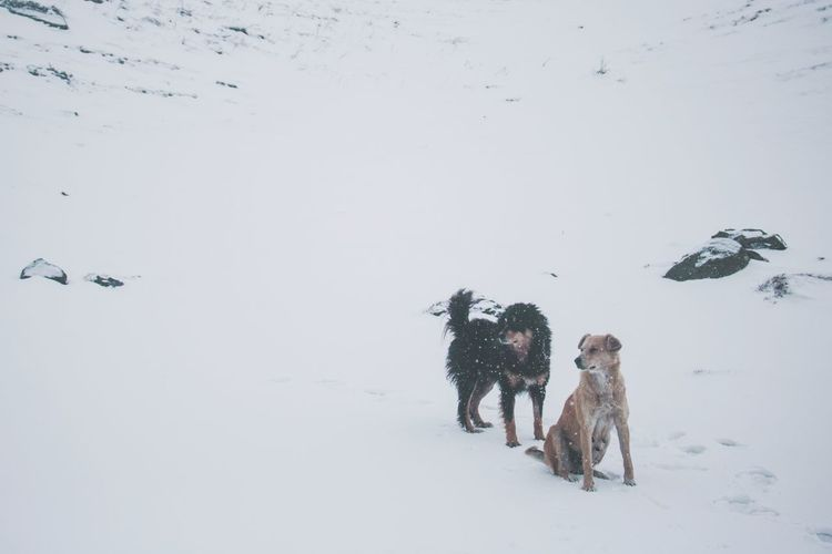 My friends in the mountains. Snow Winter Cold Temperature Animal Friendship Social Issues Nature Snowing Day Dogs Himalayas Himachal India Snowfall Mountain Dog Wolf Wild EyeEmNewHere The Great Outdoors - 2017 EyeEm Awards