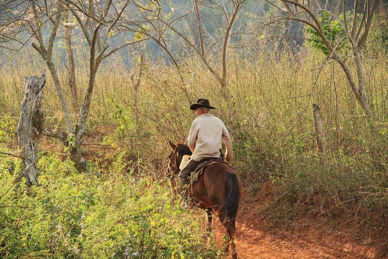 solo un paseo Cuba Collection Cuba Horse Picofthemoment Picofday Picoftheday Photooftheday Photographer Photo Landscape Nature Photography Cuban Style Cuba Viñales Valley Viñales Valley, Cuba Sunset_collection Real People Plant Ride Mammal Riding Tree Rear View