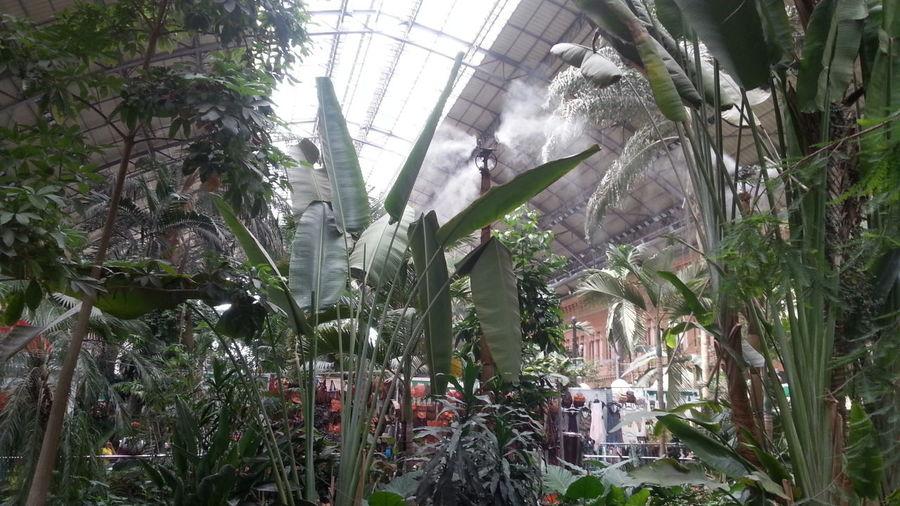 Jardín Tropical en Atocha Madrid