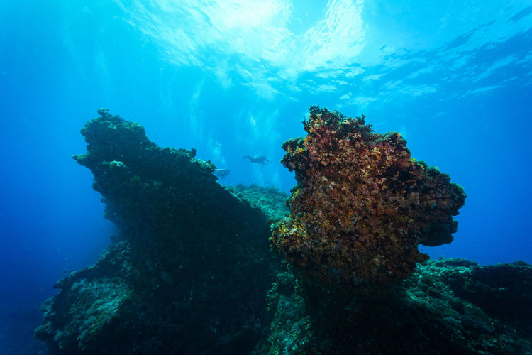 green island, Taiwan Coral Day Discovery Exploration Fish Growth Nature People Real People Scuba Diving Sea Sea Life UnderSea Underwater Underwater Diving Vacations Wetsuit