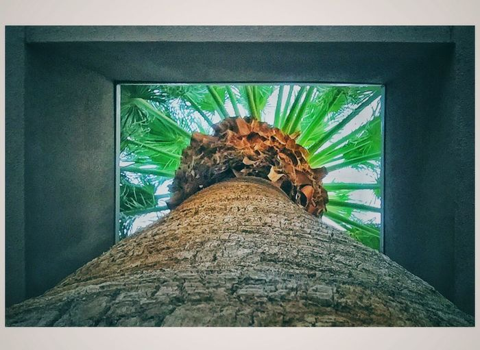 Fan Palm. UNLV. Las Vegas, NV Picturing Las Vegas Nature No People Low Angle View Day Built Structure Indoors  Architecture Tree Close-up Animal Themes Eyeemphoto This Week On Eyeem Malephotographerofthemonth IPhoneography The Street Photographer - 2017 EyeEm Awards