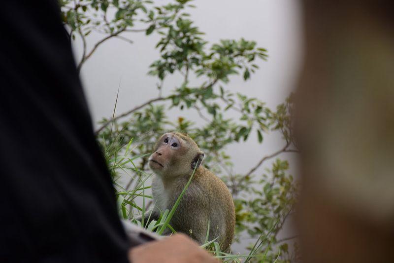Monkey #Thailand #sisaket EyeEm Selects Baboon Tree Leopard Safari Animals Close-up